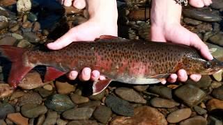 Томпорук - річка в глухій тайзі