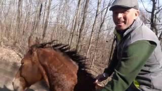 Free Horse Style - Itt a tavasz! :)