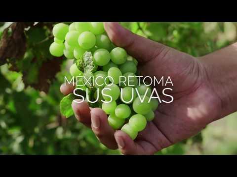 Retoma el vino mexicano (español)