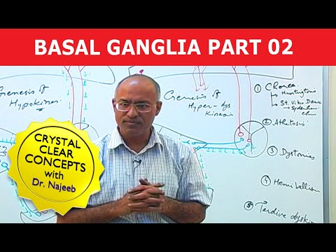 Basal Ganglia - Neuroanatomy - Part 2/3