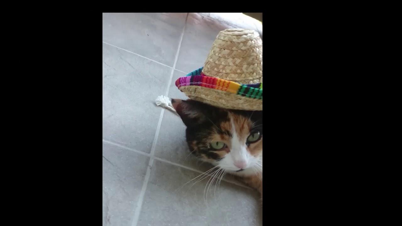 You Make Me Un Poco Loco Cat