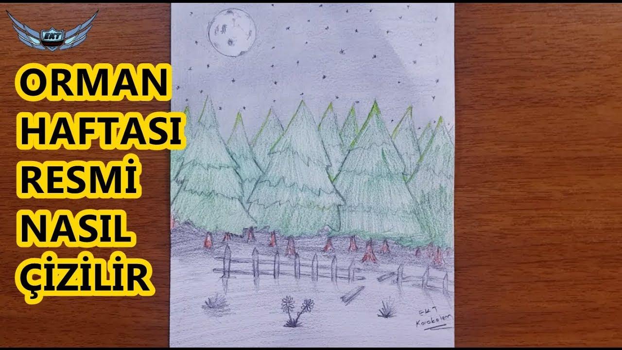 Orman Haftasi Ile Ilgili Resim Cizimi Orman Nasil Cizilir Youtube