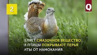 4 исчезнувших диких животных Крыма