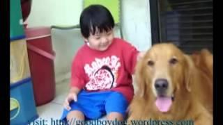 Anak Kecil Bermain Bersama Anjing Peliharaan