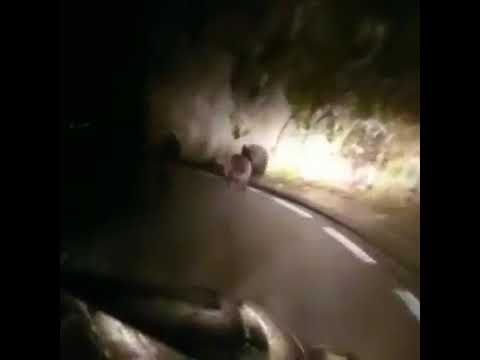 Denuncian el acoso de un conductor a dos osos en Cantabria
