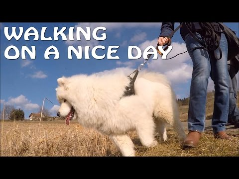 Walking on a nice day with Kiro