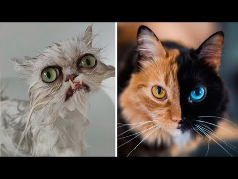 10 CATS You Won't Believe Actually Exist