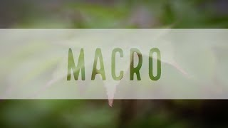 Try Macro Photography