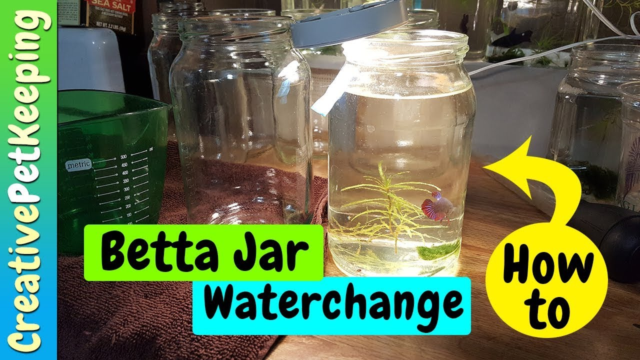 How to do a water change in a betta jar youtube for Betta fish water change