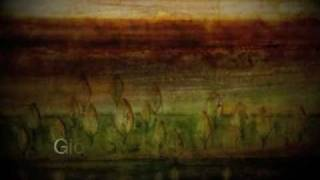 Gió Và Lá Cây (Mỹ Linh) (Salute D'Amore)