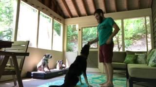 How Do I Teach My Dog To Sit?