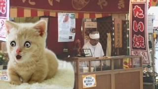 所ジョージが歌っている,たい焼き屋のおじさんを可愛い猫が,熱唱!!