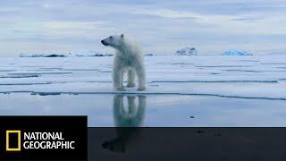Ocieplenie przyniosło niedźwiedzicy nowe wyzwania! [Wrogi Świat]