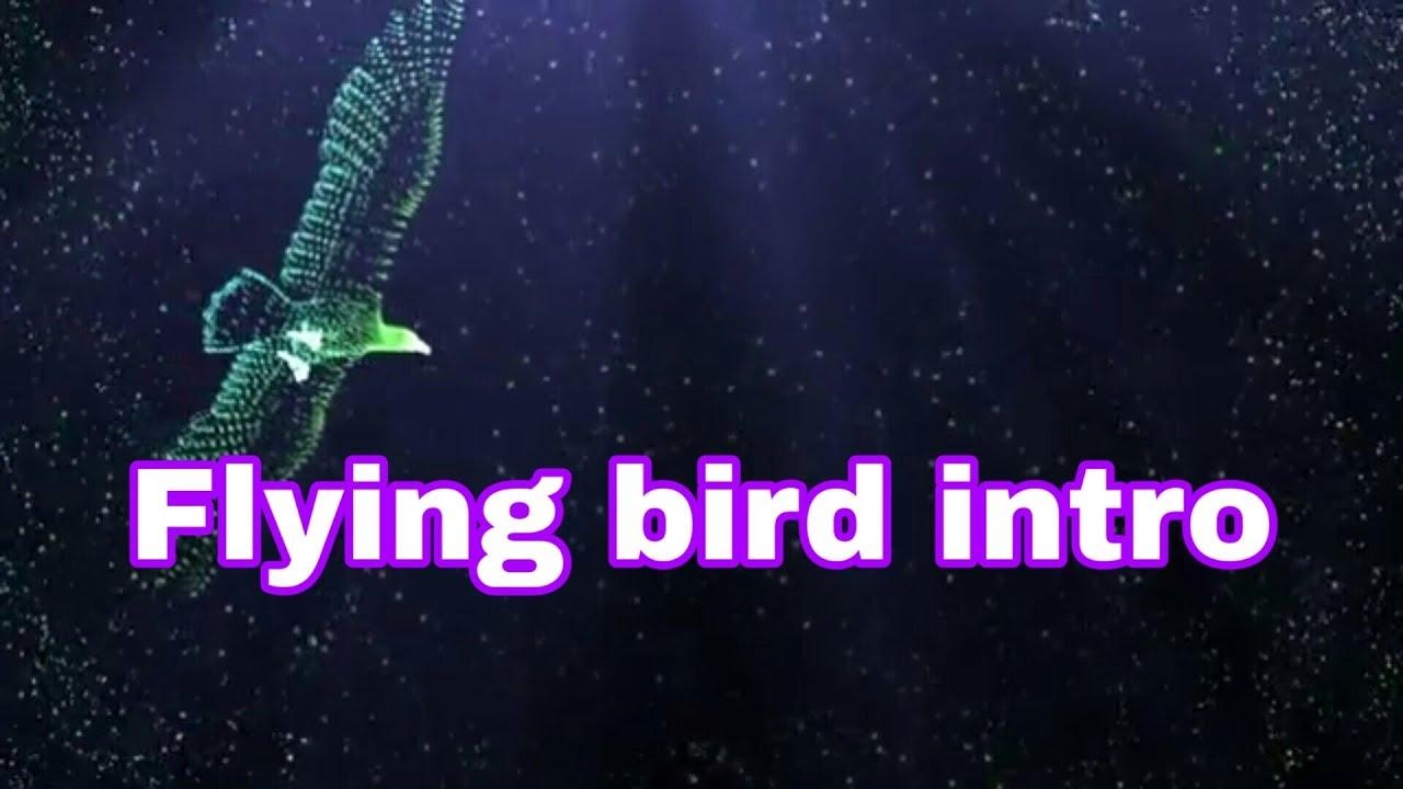 My short flying bird intro