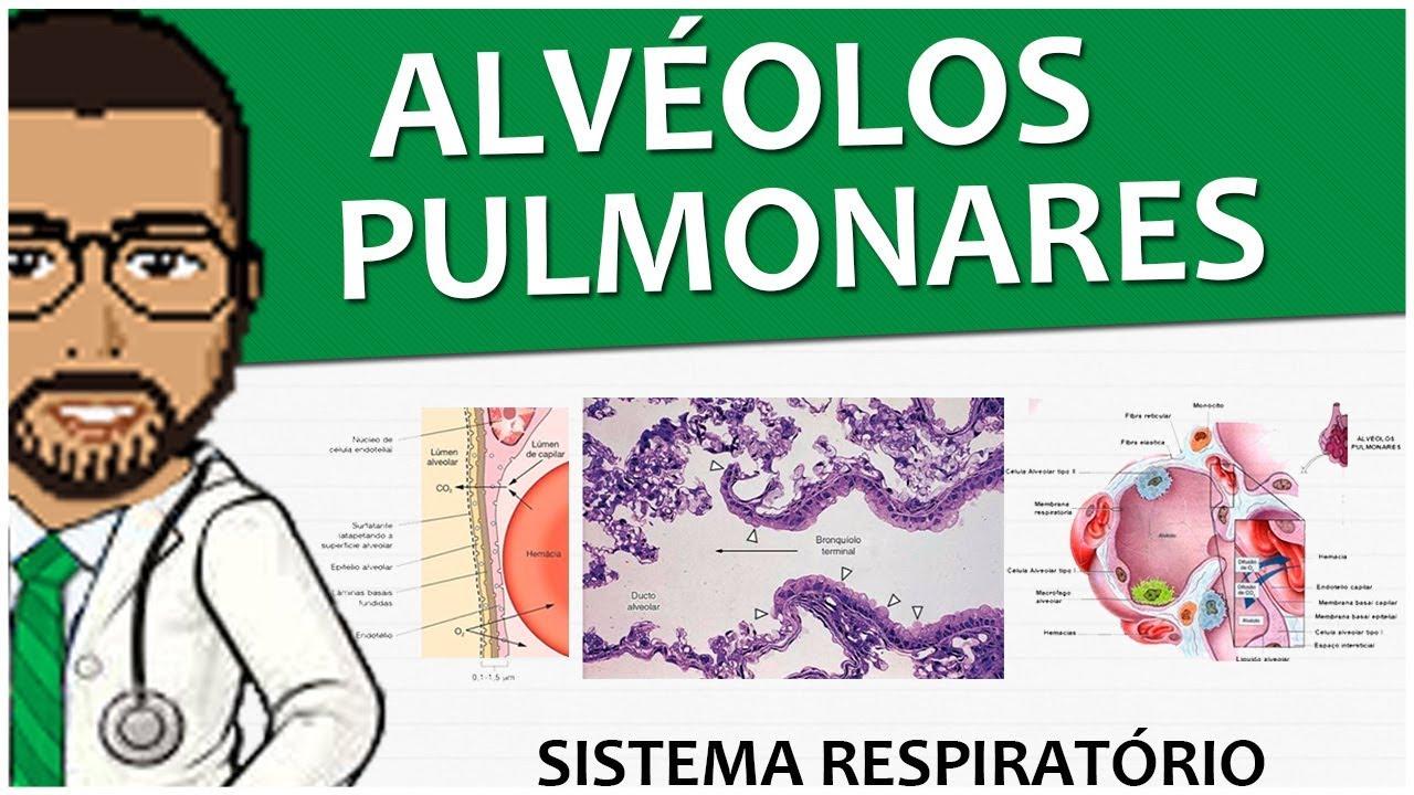 Sistema Respiratório 15 - Os alvéolos pulmonares - Pulmões (vídeo ...
