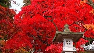 紅葉が美しい長野市若穂の清水寺・4K撮影