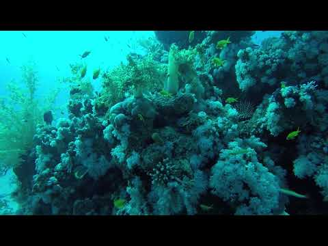 diving sharm el sheikh