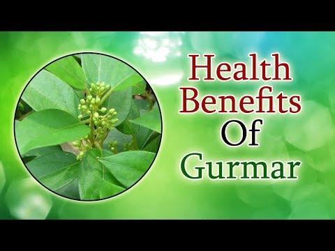 Cure Diabetes With Gymnema Sylvestre Gurmar Health Benefits Of Gurmar