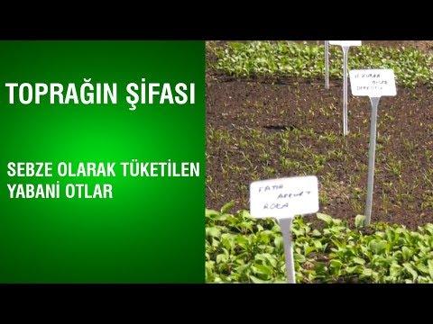 Toprağın Şifası - Sebze Olarak Tüketilen Yabani Otlar