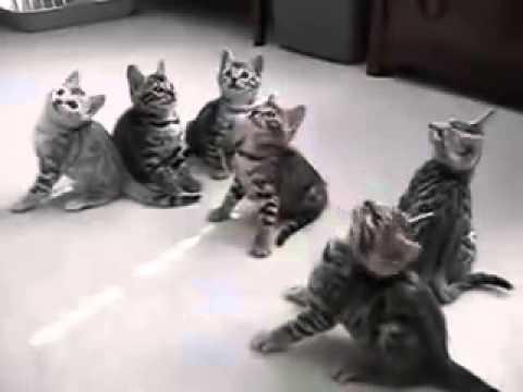 Коты кивают