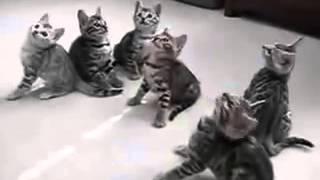 Смешные коты и кошки. Маленькие котики кивают в такт.