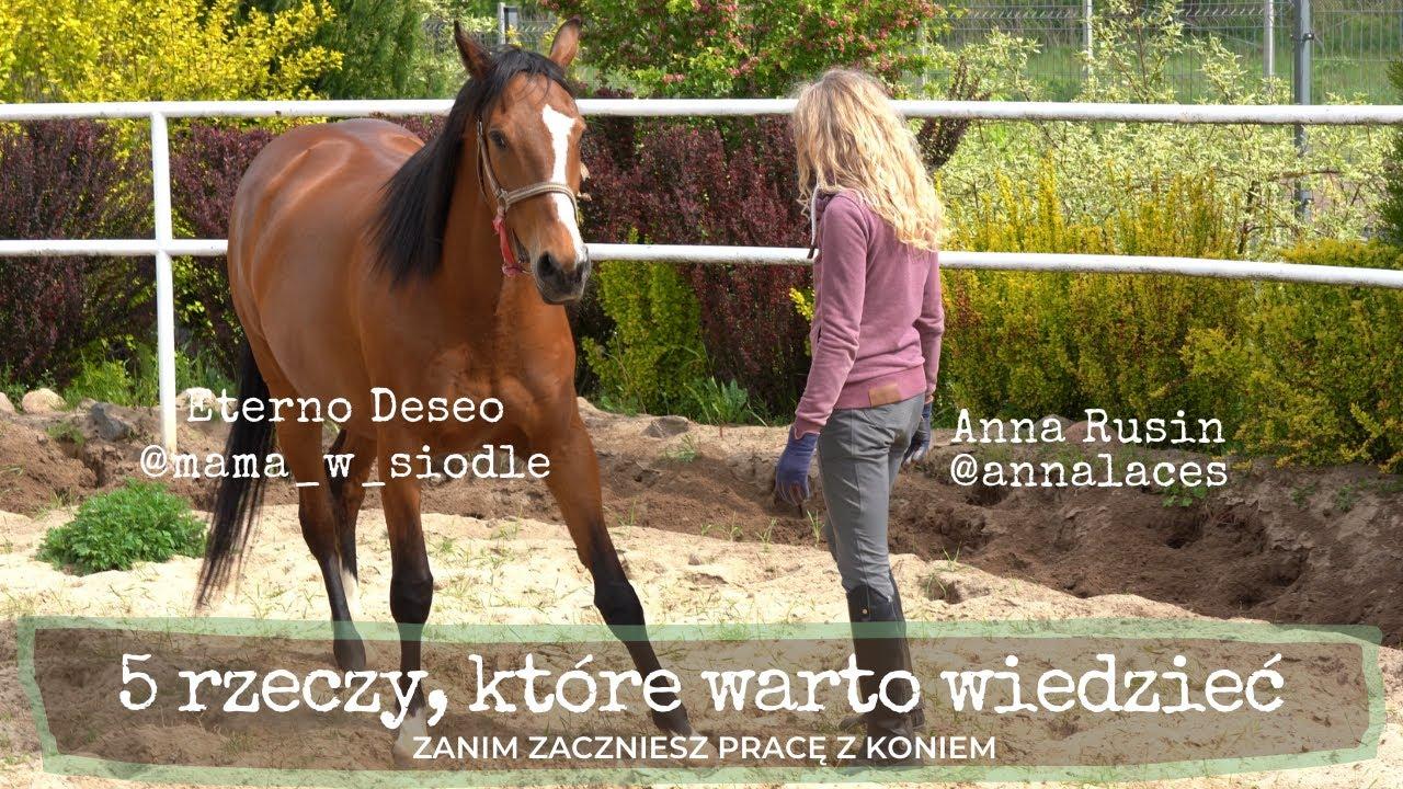 Jak porozumieć się z koniem?