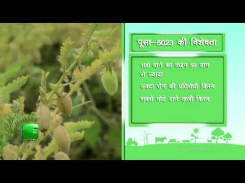 Know about Wheat, Chickpea In Baatein Kheti Ki - On Green TV