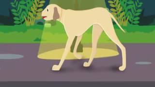 urdu de dibujos animados Azadi Ki Khushi | autoestima | perro hambriento | la libertad | de dibujos animados kahani urdu |