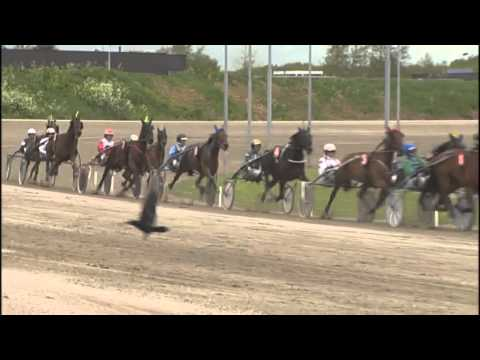 Vidéo de la course PMU PRIX EQUILIN.NL
