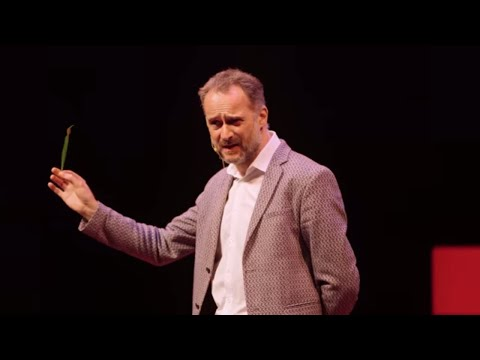 Trees, People, and Interconnection: We're All Made From Relationship  David Haskell  TEDxNashville