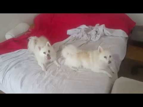 After Bathing Madeness (SOUND ON) & German Spitz