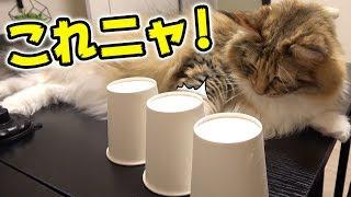 マジックを見破る猫がすごい thumbnail