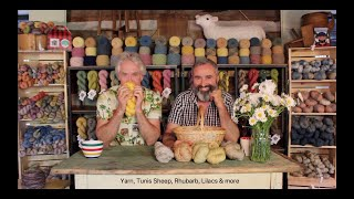 Lilac Yarn, Tunis Sheep and Cabin talk