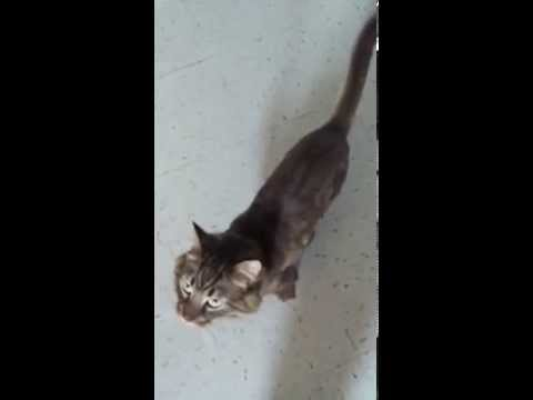Cats doing dog tricks (Trained by me)