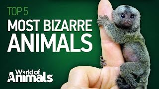 Top 5 Most Bizarre Animals
