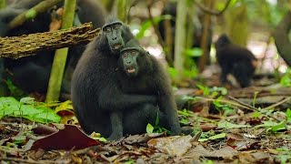 Cute Affectionate Monkeys - Lands Of The Monsoon - BBC