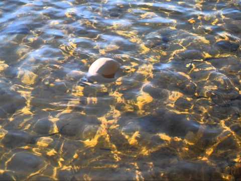 Floating Urn
