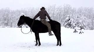 Fun with Horsemanship | Chris Shalliev | Horsenook