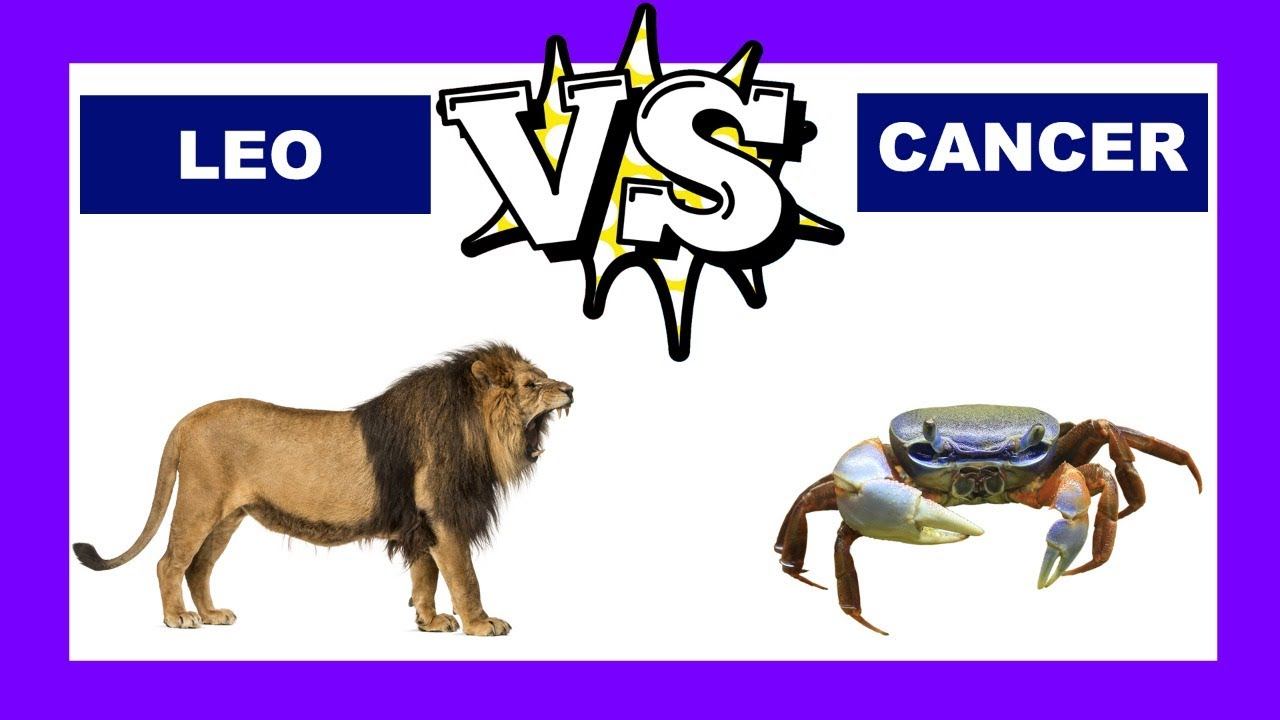 Leo vs  Cancer: Who Is The Strongest Zodiac Sign