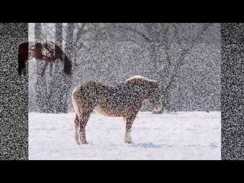 18 Great Pictures of Horses in the Snow