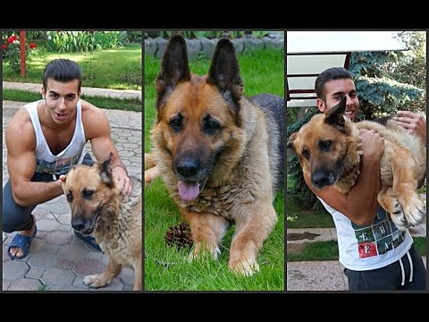 Список запрещённых агрессивных пород собак с фото
