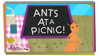 How Do Ants Find Food?