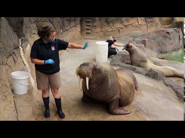 Point Defiance Zoo and Aquarium Animal Greetings!