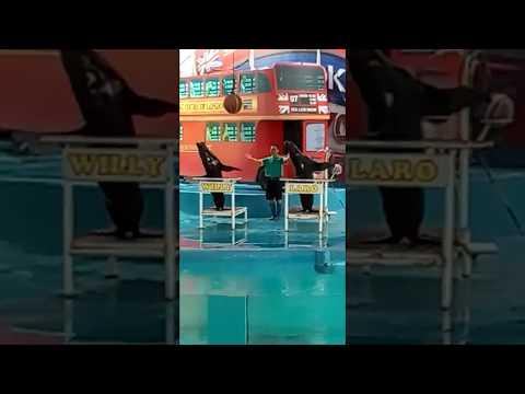 pertunjukan-singa-laut-|-jatim-park-2