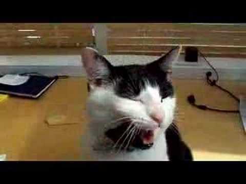 Cat Singing Happy Birthday Free Pets ECards Greeting Cards 123 Greetings