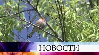 За неделю до календарного лета в Центральном регионе России ожидается совсем не жаркая погода.