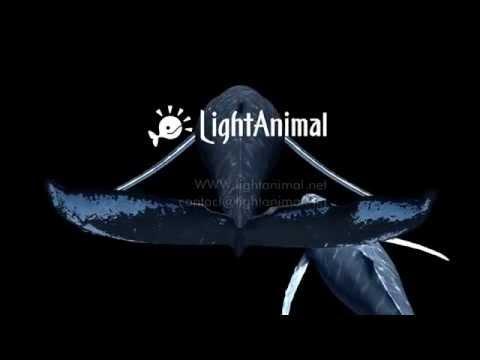 LightAnimal The digital animal exhibition system