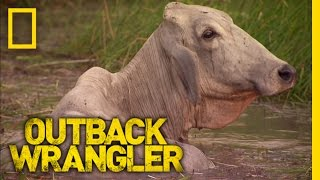 Helicopter Cattle Ranching | Outback Wrangler
