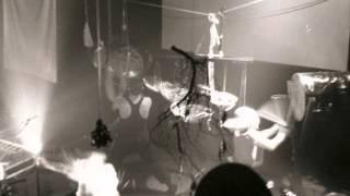 SPK - Alocasia Metallica
