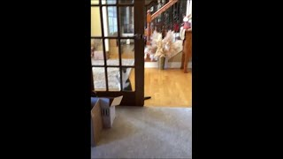 Cat Stops Pawing The Glass Door As His Owner Asks Him To